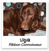 Logan, Chocolate Lab