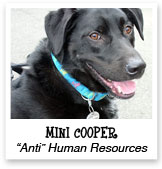 Mini Cooper, Black Lab